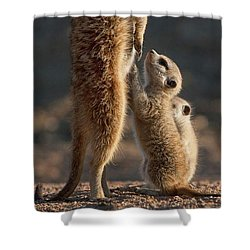 The Baby Is Hungry Shower Curtain
