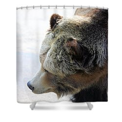 The Bear Shower Curtain by Karol Livote