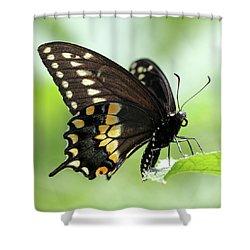 The Beautiful Black Swallowtail Shower Curtain