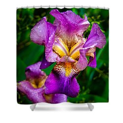 Shower Curtain featuring the photograph The Beautiful Iris by Robert Bales