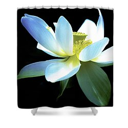 The Beauty Of A Lotus Shower Curtain by Julie Palencia