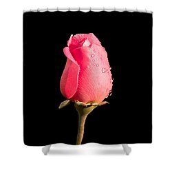 The Beauty Of A Rose Shower Curtain by Ed Clark