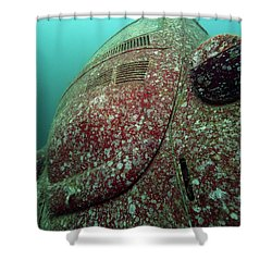 Shower Curtain featuring the photograph The Beetle by Rico Besserdich