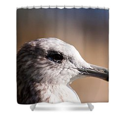 The Best Side Of The Gull Shower Curtain