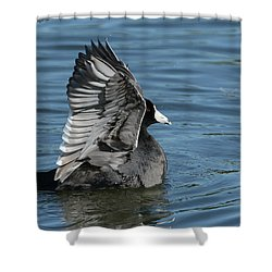 Shower Curtain featuring the photograph The Big Flap by Fraida Gutovich
