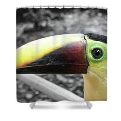 The Big Toucan Shower Curtain