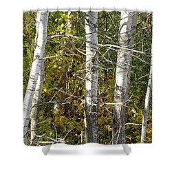 Shower Curtain featuring the photograph The Birches by Kimberly Mackowski