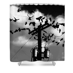 The Birds Shower Curtain by David Lee Thompson