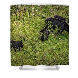 Shower Curtain featuring the photograph The Black  Bear Family by Robert Bales