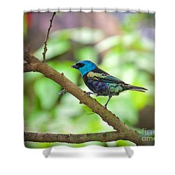 Shower Curtain featuring the painting The Blue Necked Tanager by Judy Kay