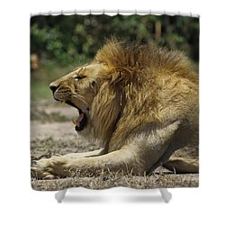 Shower Curtain featuring the photograph The Boss by Ramabhadran Thirupattur
