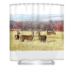 Shower Curtain featuring the photograph The Bucks Stop Here White-tail Deer  by Jennie Marie Schell