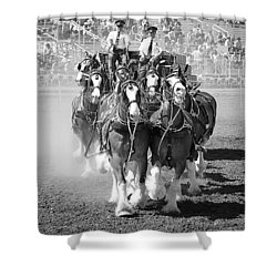 The Budweiser Clydesdales Shower Curtain