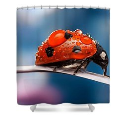 The Bug Shower Curtain by Thomas M Pikolin