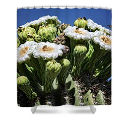 Shower Curtain featuring the photograph The Busy Little Bees On The Saguaro Blossoms  by Saija Lehtonen