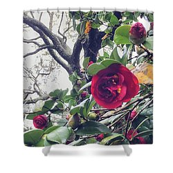 The #camellias In #charleston Are To Shower Curtain