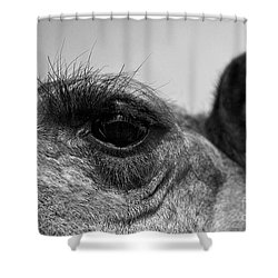 The Camels Eye  Shower Curtain