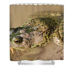 The Camouflage Frog Shower Curtain