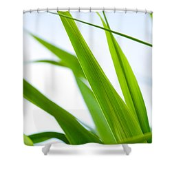 The Cane Shower Curtain