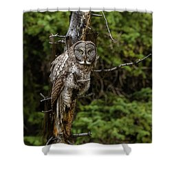 The Captivating Great Grey Owl Shower Curtain by Yeates Photography