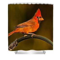 The Cardinal Shower Curtain