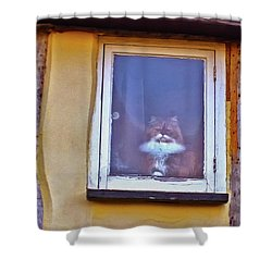 The Cat In The Window Shower Curtain by Anne Kotan