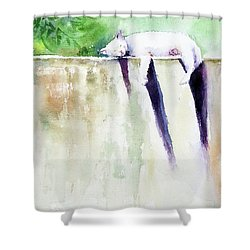 The Cat-nap Shower Curtain