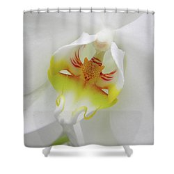 Shower Curtain featuring the photograph The Cat Side Of An Orchid by Manuela Constantin