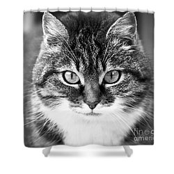 The Cat Stare Down Shower Curtain