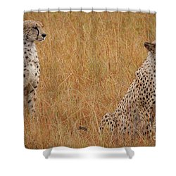 The Cheetahs Shower Curtain by Nichola Denny