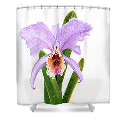 The Christmas Orchid Shower Curtain