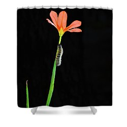 The Climb Shower Curtain by Cassandra Buckley