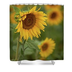 The Close Up Of Sunflowers Shower Curtain