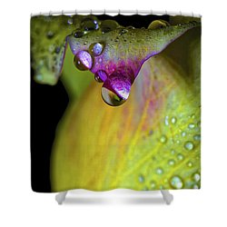 The Color Of Rain Shower Curtain by Mitch Shindelbower