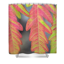The Colors Of Shumac 8 Shower Curtain