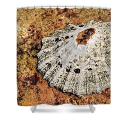 The Common Limpet Shower Curtain by Werner Lehmann