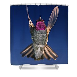 The Conductor Of Hummer Air Orchestra Shower Curtain