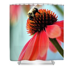 The Coneflower Collection 2 Shower Curtain