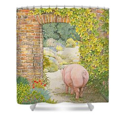 The Convent Garden Pig Shower Curtain by Ditz