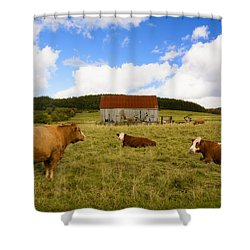 The Cows Of Mabou Shower Curtain by Ken Morris
