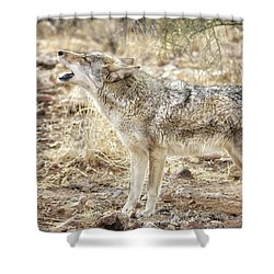 The Coyote Howl Shower Curtain