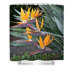 The Crane Flower - Bird Of Paradise  Shower Curtain