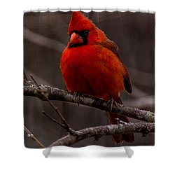 The Crimson Suit Shower Curtain