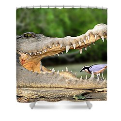 The Crocodile Bird Shower Curtain