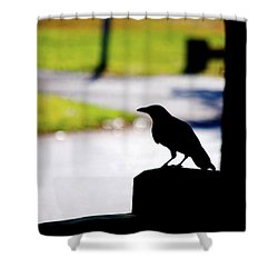 Shower Curtain featuring the photograph The Crow Awaits by Karol Livote