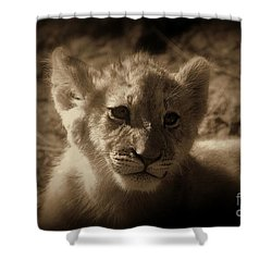 Shower Curtain featuring the photograph The Cub by Lisa L Silva