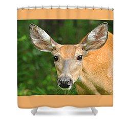The Curious Doe Shower Curtain