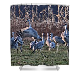Shower Curtain featuring the photograph The Dance by Shari Jardina