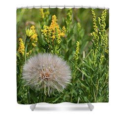 The Dandelion  Shower Curtain