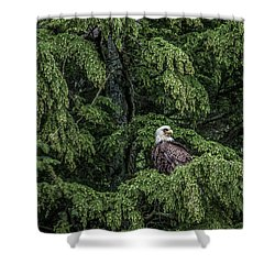 The Dark Eyed One Shower Curtain by Timothy Latta
